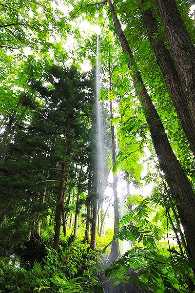 Trieb ―雨為る森―で木の上から舞い落ちる水 上側